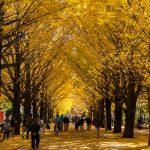 จุดชมใบไม้เปลี่ยนสี-Hikarigaoka Park