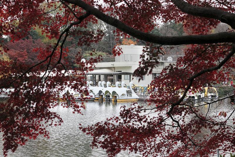 จุดชมใบไม้เปลี่ยนสี-Inokashira Park1