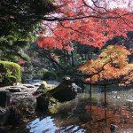 จุดชมใบไม้เปลี่ยนสี-Koishikawa Korakuen Park