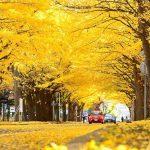 จุดชมใบไม้เปลี่ยนสี-Meiji Jingu Gaien Park