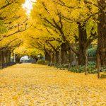 จุดชมใบไม้เปลี่ยนสี-Showa Kinen Park