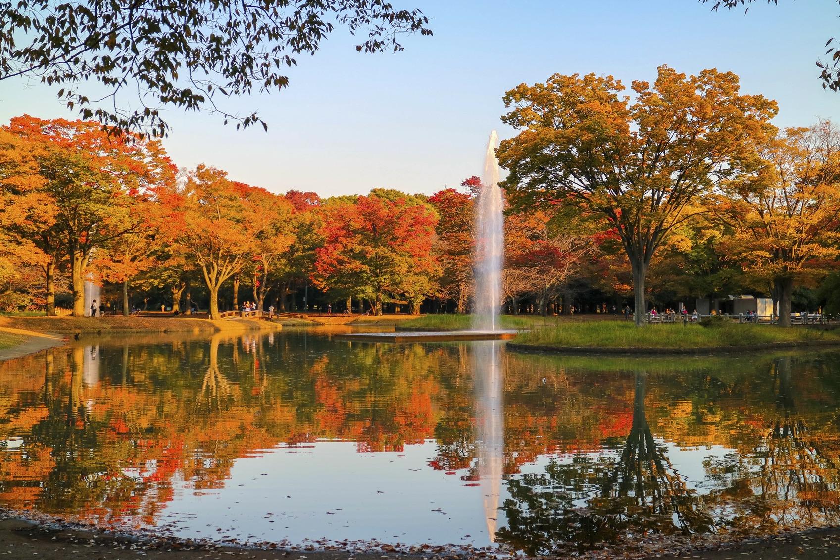 จุดชมใบไม้เปลี่ยนสี-Yoyogi-Park