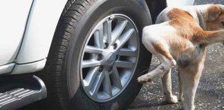 ป้องกันสุนัขฉี่ใส่ล้อ