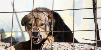 โรคพิษสุนัขบ้า รักษาไม่ได้แต่ป้องกันได้