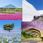 ที่เที่ยวญี่ปุ่น ที่มีแค่ช่วง Golden week เท่านั้น!!