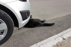 มีสัตว์วิ่งตัดหน้ารถ