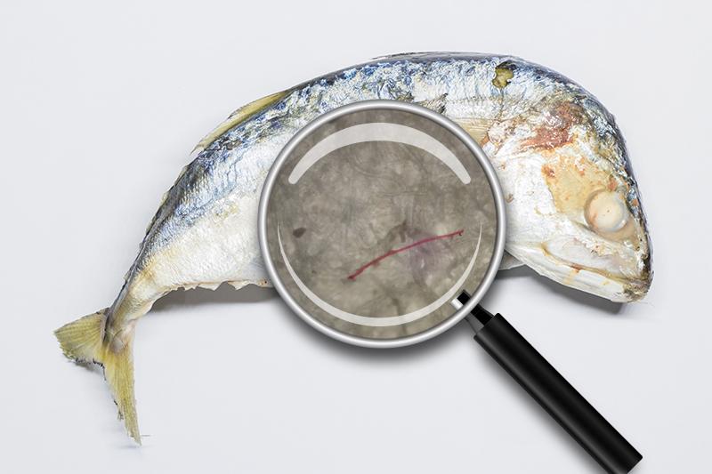 ไมโครพลาสติกในปลาทู
