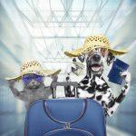 เอกสารที่ต้องเตรียมนำสัตว์เลี้ยงขึ้นเครื่องบินไปต่างประเทศ