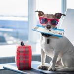 สัตว์เลี้ยงขึ้นเครื่องบิน ไปต่างประเทศต้องทำอย่างไร