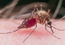 โรคไข้เลือดออก กับ 7 วิธีป้องกันตัวเองอย่างถูกต้อง