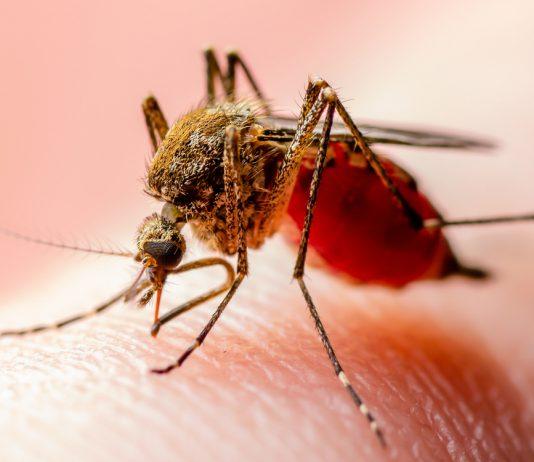 โรคชิคุนกุนยา โรคอันตรายในช่วงหน้าฝน